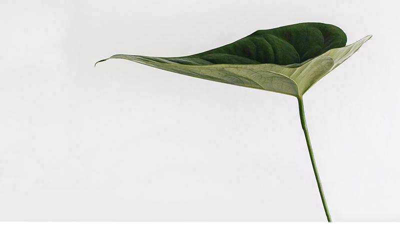 interieurarchitect plant groen wonen